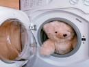 Làm sạch thú nhồi bông bằng máy giặt